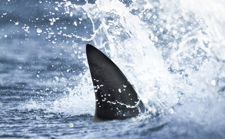 A glimpse of a whale's fin in splashing water.