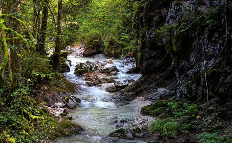 A photo of a water stream in the forest.