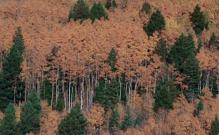 A broad panoramic view of a forest.