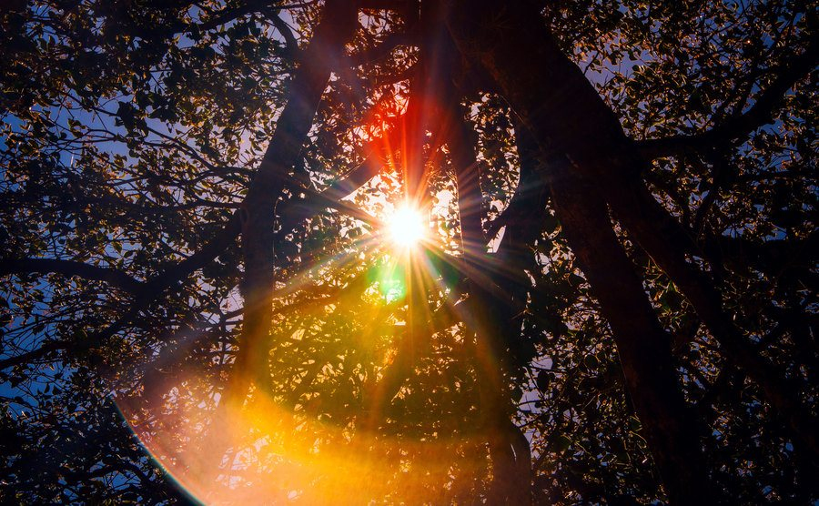 A photo of flashes of the sun among the foliage of a tree.